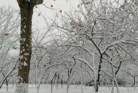 大雪纷飞 梦见大雪纷飞