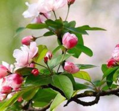 描写春天花的诗句