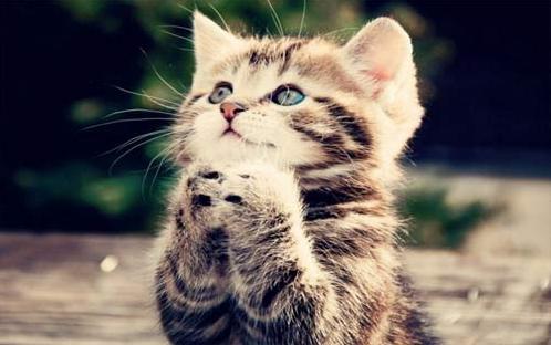 公开课优质课课件《猫》老舍(公开课课件)