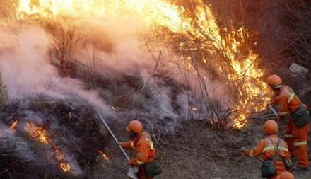 森林防火工作情况汇报材料篇